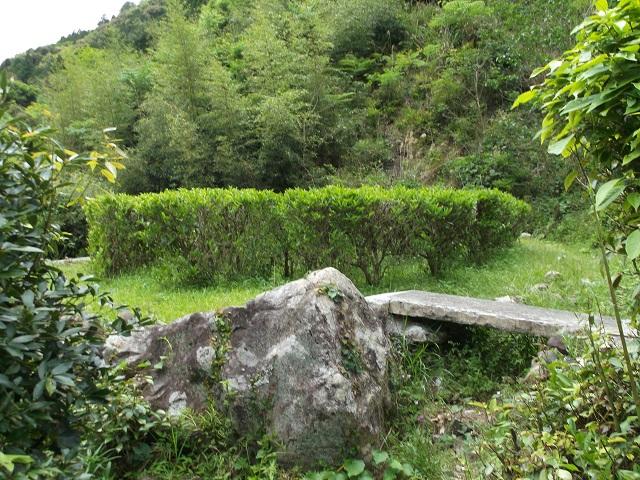 山田の茶畑
