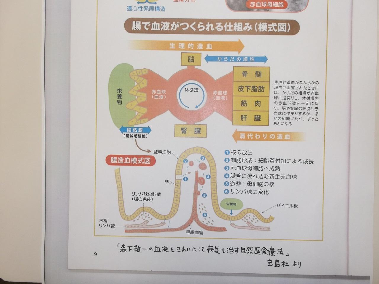 腸造血資料その1