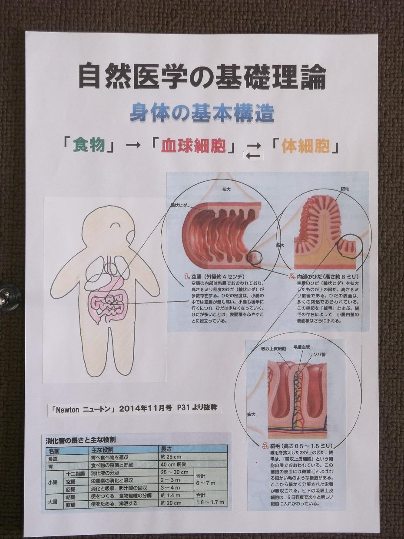 体の基本構造