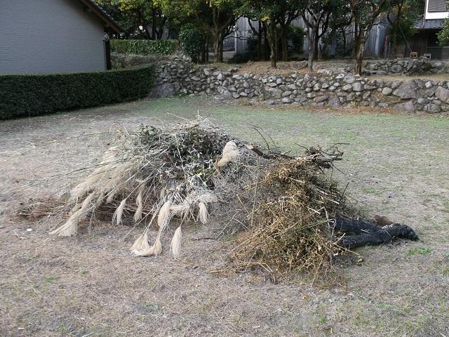 雑草とユズの若木