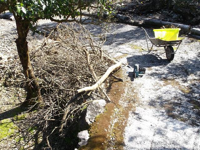 剪定したユズの枝の残りの運搬