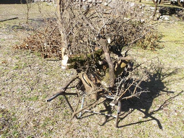 剪定したユズの枝