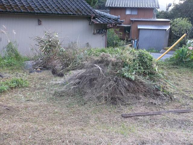今年、抜いたり剪定したりした雑草と枝